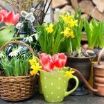 spalvingos-pavasario-geles-5130a07697d1f