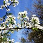 Pavasarine zal 11